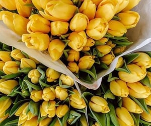 tulips, yellow, and цветы image
