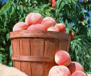 peach, pink, and sweet image