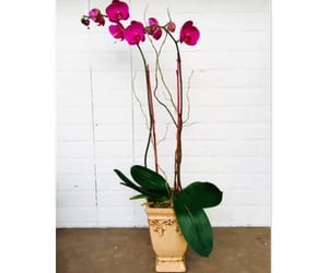 ca, flower delivery, and florist in redwood city image