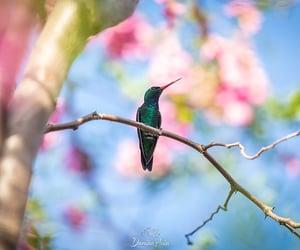 beautiful, colibri, and colorful image
