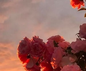 flowers, sunset, and wallpaper image