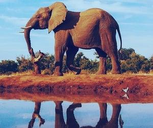 aesthetic, animals, and beautiful image