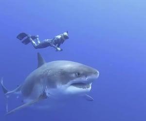 diver, shark, and huge shark image