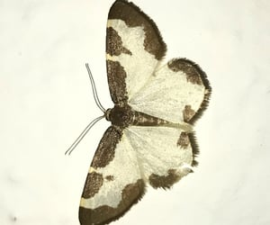 beauty, brown, and butterfly image