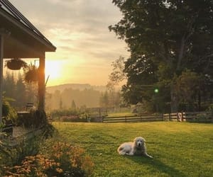 dog, nature, and pretty image