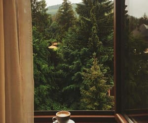 coffee, nature, and photography image