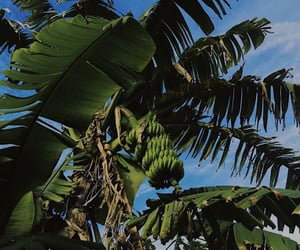 tropical, green, and sky image