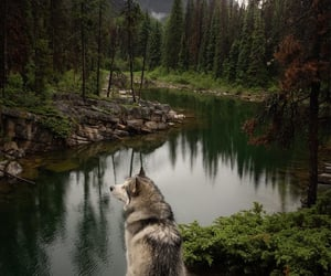 Jack enjoying the rain and a quiet spot in the Rockies
