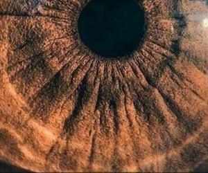 brown, brown eyes, and eye image