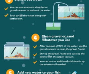 how to clean a fish tank image