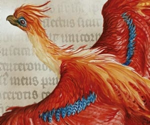 phoenix, harry potter, and fawkes image