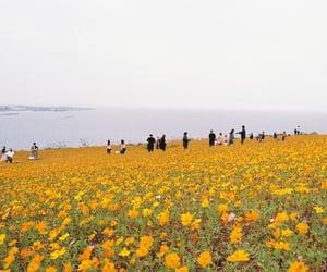 coast, flowers, and nature image