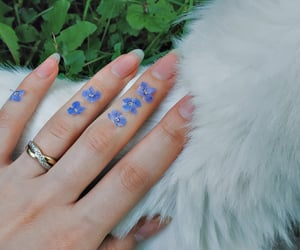 blue flowers, flowers, and cat image