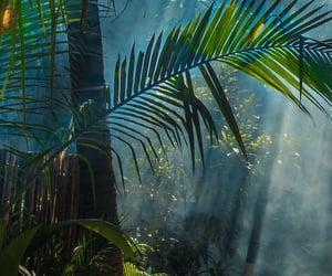 green, jungle, and leaf image