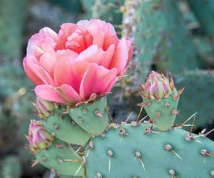 cactus, flowers, and natural image