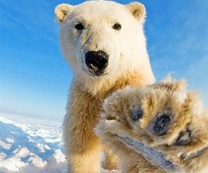 красиво, лапа, and медведь image