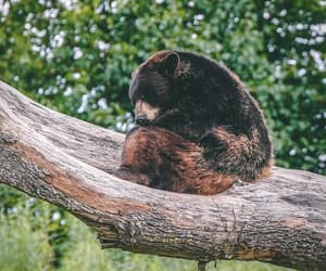 animals, bear, and weheartit image