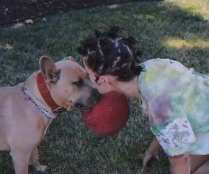 dog, singer, and halsey image