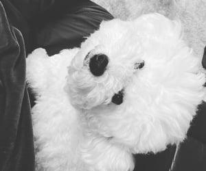 dog, white dog, and cute image