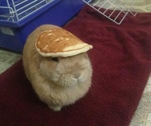 bunny, pancakes, and rabbit image