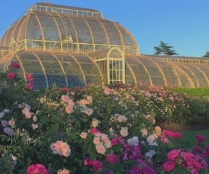 flowers, nature, and greenhouse image
