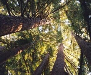 лес, лето, and деревья image