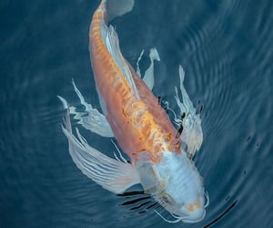aesthetic, animals, and fish image