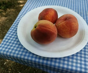 forest, peach, and picnic image
