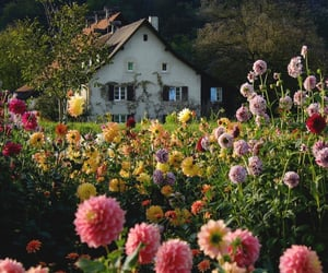 flowers, aesthetic, and cottage image