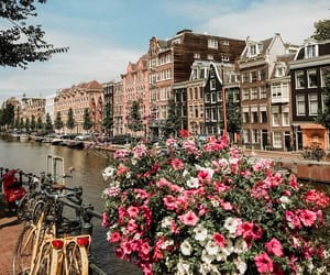 flowers, aesthetic, and amsterdam image