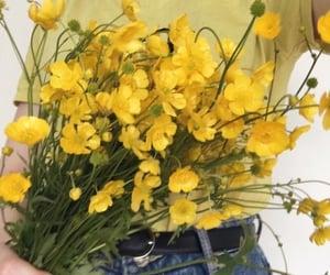 amarillo, yellow, and pinterest image