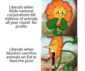 feed, million, and muslims image