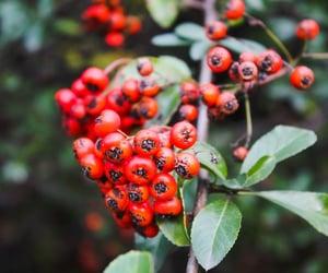 art, berries, and nature image