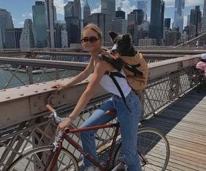 denim, dog, and new york image