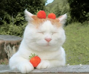 cat, strawberry, and aesthetic image