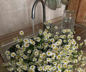 flowers, daisy, and home image