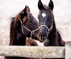 animals, country living, and equestrian image
