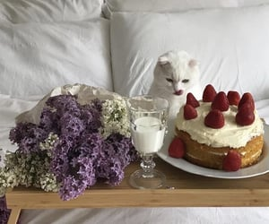 flowers, cat, and cake image