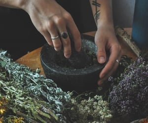 herbs, witch, and magic image