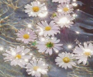 daisy, forest, and flowers image