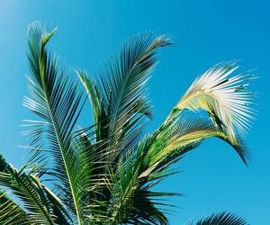 beach, blue sky, and freedom image