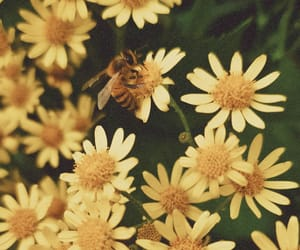 bee, flowers, and insect image