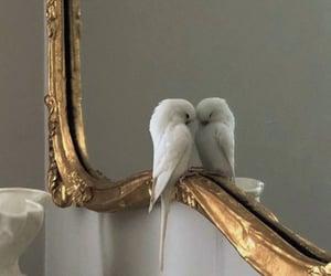 mirror, bird, and animal image