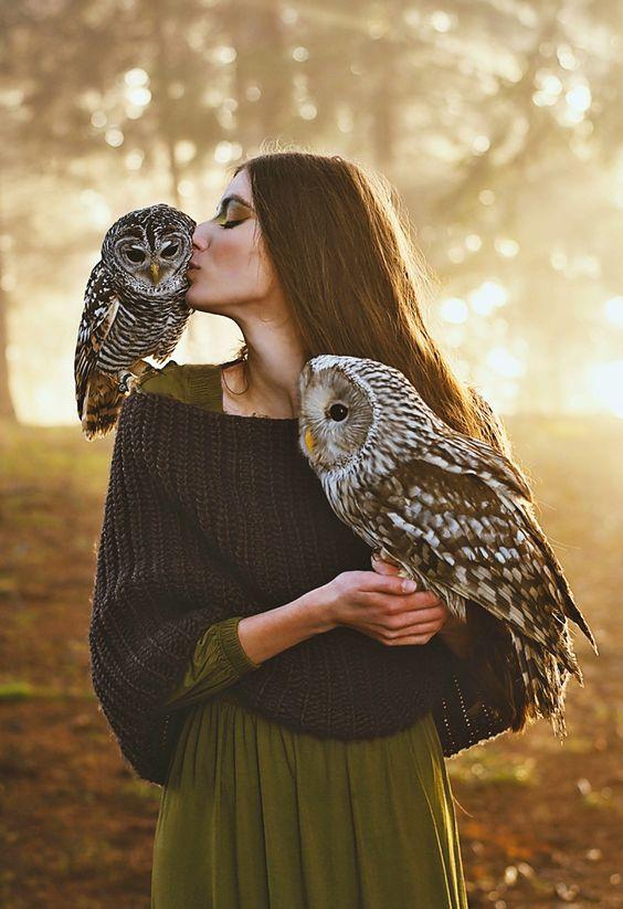animal, owl, and familiar image