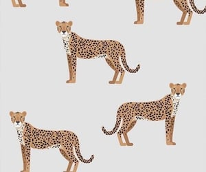 wallpaper and leopardo image