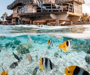 fish, ocean, and beach image