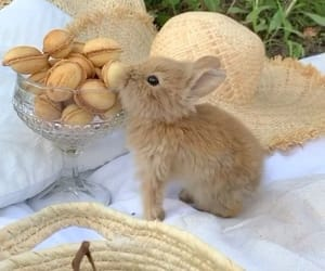 animals, bunnies, and cuteness image