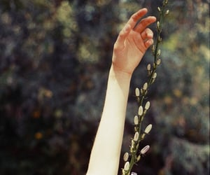 hand, nature, and pale image
