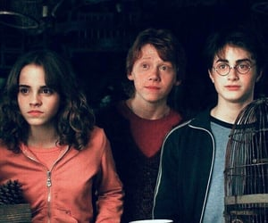 harry potter, harry, and hermione image