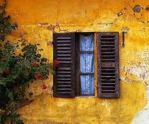 flowers, window, and yellow image